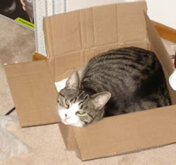 Betcha-wish-you-could-fit-in-this-box
