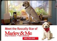 Meet-the-rascally-star-of-Marley-n-me