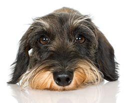 Puppy-needs-a-walk