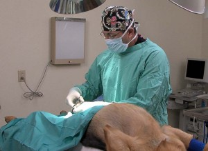 Animal.-surgery-at-the-vet