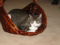 Bailey_in_basket