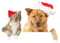 Chrsitmas-cat-and-dog