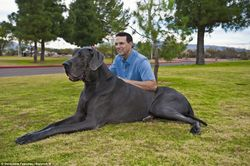 George-tallest-dog-2