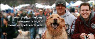 Help-homeless-pets