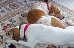 Chester-Emily-Snuggling2