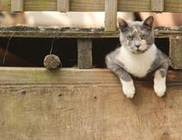 Feral-cat-in-barn