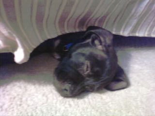 Puppy-sound-asleep
