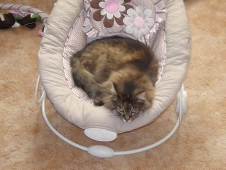 Kitty-in-baby-chair