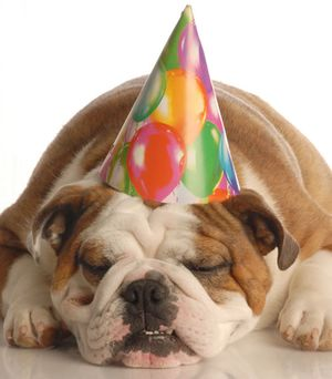 Happy-bulldog-birthday