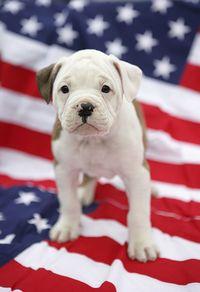 Puppy-flag
