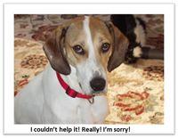 Emily-sorry