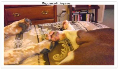 One-huge-paw-one-little-paw