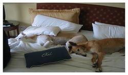 Dog_hotel
