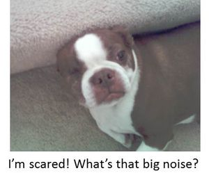 Olive-scared