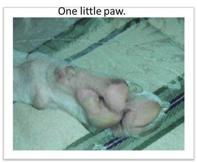 Olives-paw