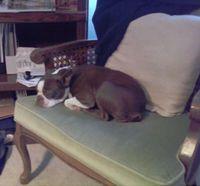 Olive-sleeping