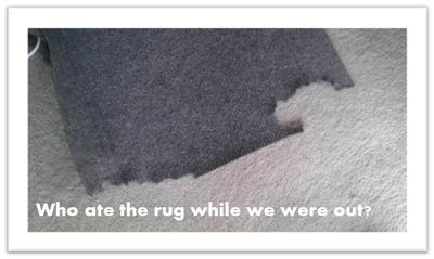 Who-ate-the-rug-while-we-were-out