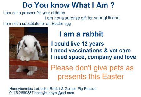 I-am-a-rabbit
