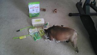 Olive-inspects-Royal-Canin