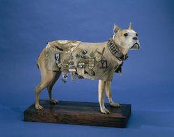 Stubby-military dog