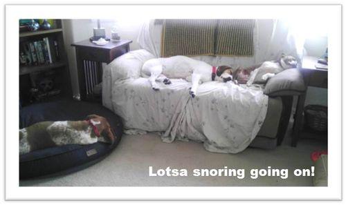 Lotsa-snoring