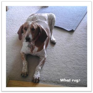 Chester-says-what-rug