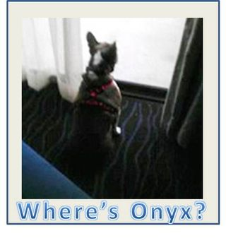 Missing-onyx
