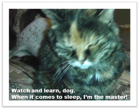 Sleep-cat-