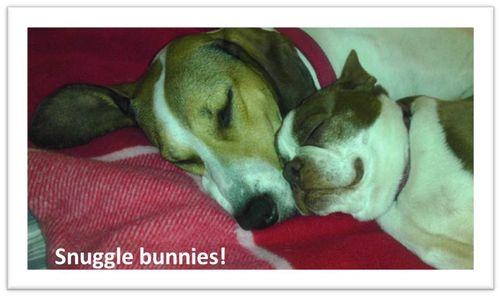 Snuggle-bunnies
