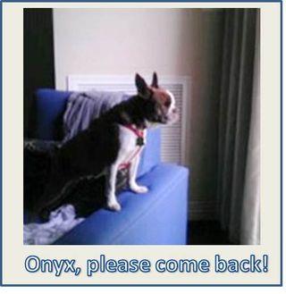 Onyx-come-back