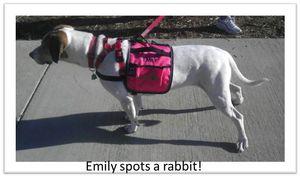 Emily-spots-a-rabbit