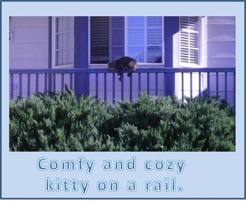 Kitty-on-a-rail