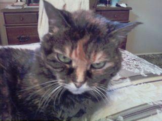Pandora-being-grumpy