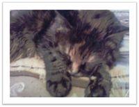Sleepy-kitty