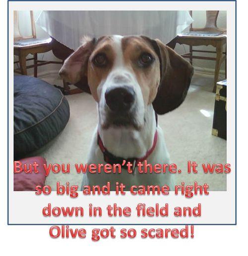 Olive-got-scared