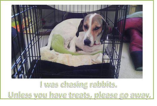 Emily-chasing-rabbits