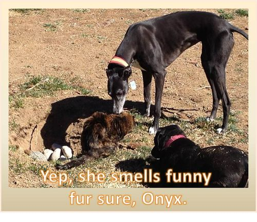 Kitty-smells-funny