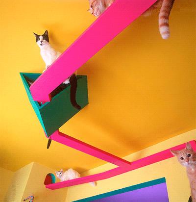 Cat-2-webopt