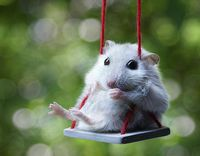 Swinging-mouse