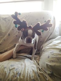 Olive-the-other-reindeer-1