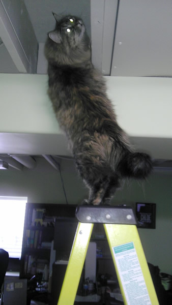 Molly Exploring from the Top of a Ladder