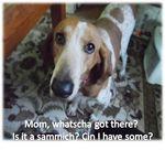 Chester-wants-sandwich