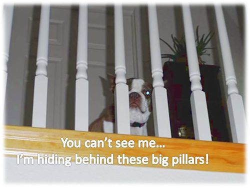 Olive-hiding-behind-pillars