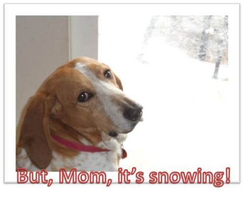 Mom-its-snowing
