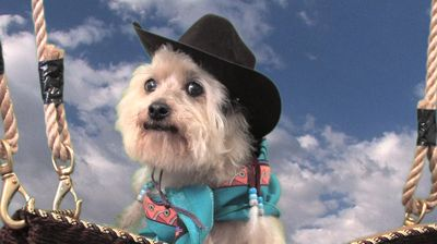 Cowboy Frankie, the best