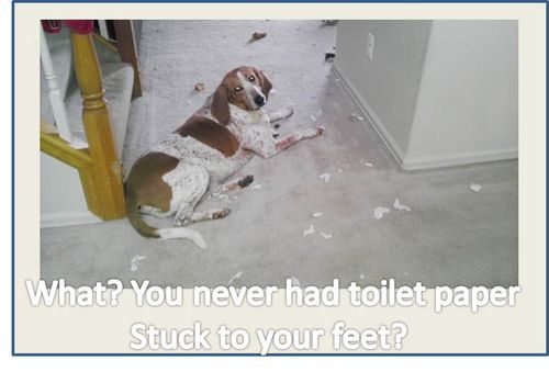 Chester-toilet-paper