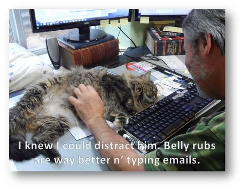 Belly-rubs-Molly-Tom