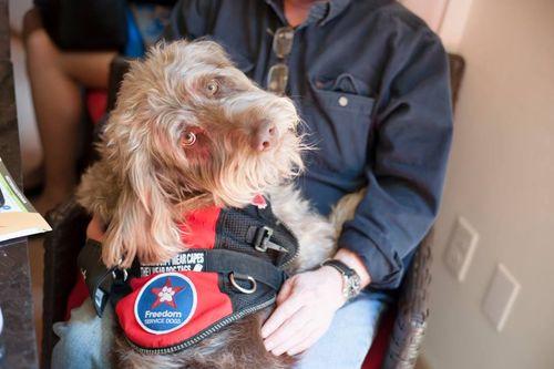 Gander-Freedom-Service-Dog