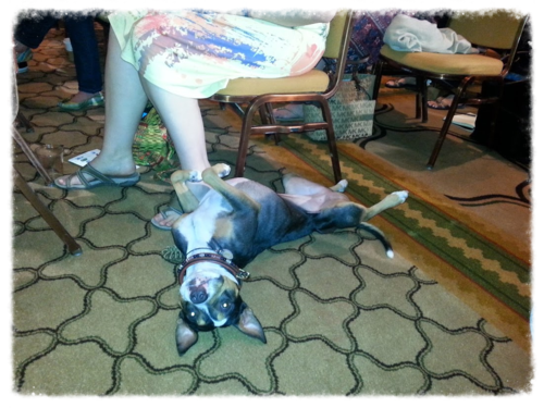 Enjoying-BlogPaws
