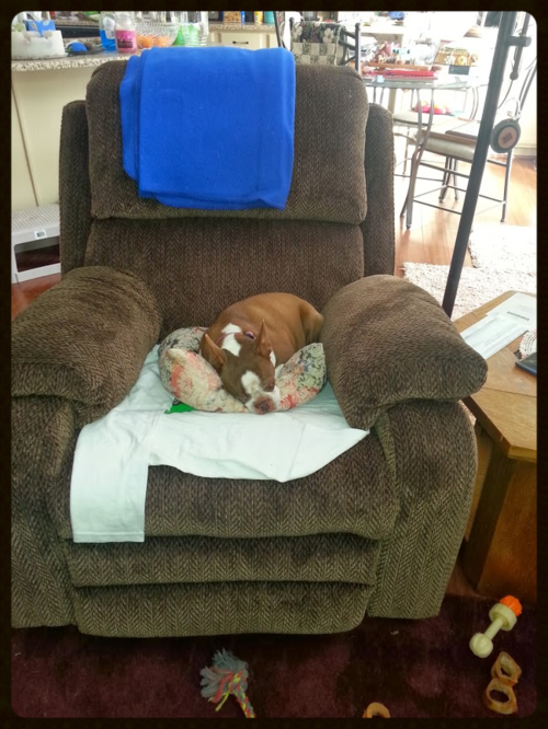 Compy Olive sleeping